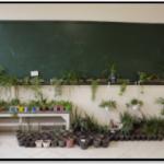 گل کاری در مدرسه